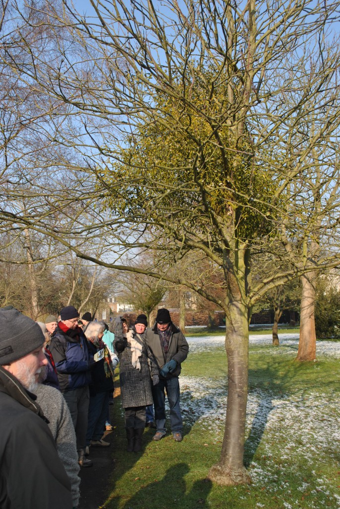 A frosty Mistletoe Walk with the Friends of Bushy and Home Park