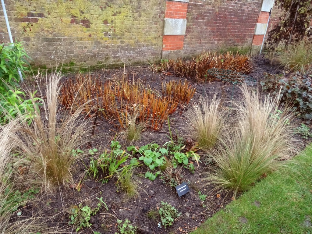 The herbaceous border at Hampton Court Palace in the winter