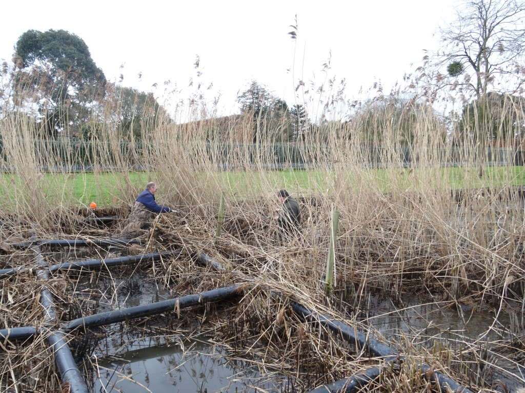 Spring maintenance of the reeds