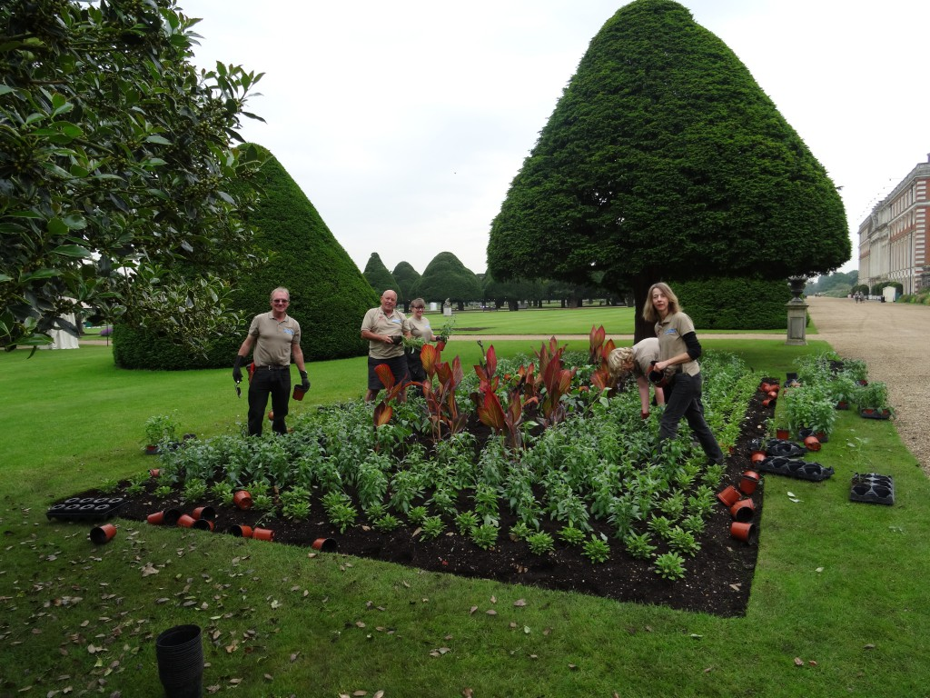 East Front Team planting with Canna, Salvia and Rudbeckia