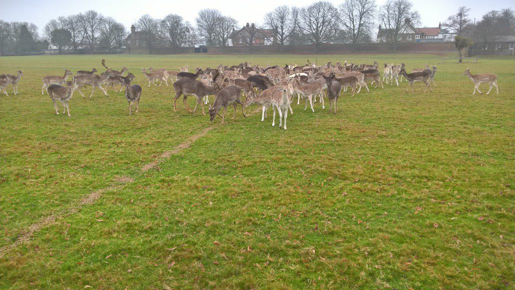 Deer and fawns feeding, mainly consisting of does