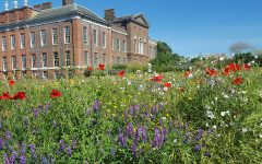 Wildflowers bloom at Kensington Palace