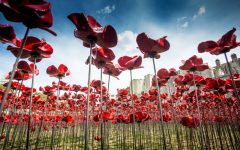 Never forget: Poppies and other symbols of remembrance