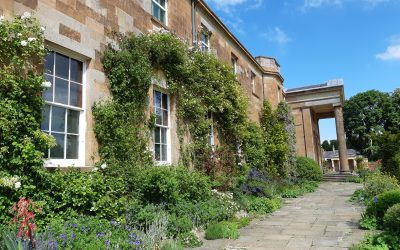 Walls of the South Terrace enveloped in Wisteriasinensis, Rosabanksia'Lutea' and wall shrubs.